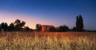 campos de trigo en Murcia