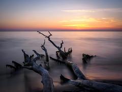 Weststrand II (tosch_fotografie) Tags: meer ostsee sonnenuntergang wellen wolken strand totholz äste langzeitbelichtung sommer wasser olympus omd em1