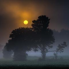 Fontecada (Feans) Tags: sony a7r a7rii ii fe 24105 g mencer sunrise fog neboa mist fontecada galiza galicia