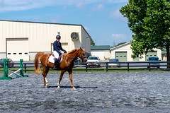 """""""Hello!"""" (HelwigPhotos) Tags: horse riding jump jumping woman happy sunny sports equestrian fence chestnut arabian tree pennsylvania barrel show champion action trailer travel shiny clean wash"""