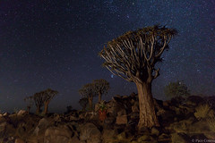 The quiver forest tree (Paco Conesa) Tags: namibia africa quiver tree forest landscape night nocturna canon lightpainting paco conesa