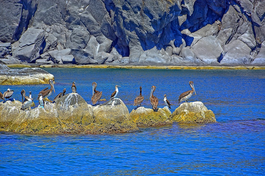 """Can you spot the """"Blue Footed Boobie"""""""