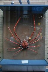 Liverpool 020718 - DSC_0847 (Leslie Platt) Tags: liverpool nationalmuseumsliverpool exposureadjusted straightened chinasfirstemperorandtheterracottawarriors