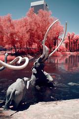 A Slow Death (Infrakrasnyy) Tags: infrared ir sony nex 5n full spectrum conversion kolari 550nm la brea tar pits page museum ice age prehistory