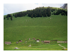 * (Daniel Espinoza) Tags: agfarsx100 film film120 transparency analogphotography analogica pellicola suisse schweiz switzerland minimal danielespinoza filmphotography mamiya mediumformat