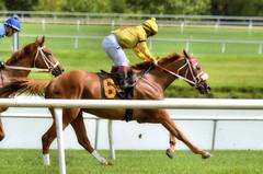 "2016-08-19 (13)  r1 Jorge Perez on #6 Morning Vow (JLeeFleenor) Tags: photos photography md maryland marylandracing marylandhorseracing jockey جُوكِي ""赛马骑师"" jinete ""競馬騎手"" dżokej jocheu คนขี่ม้าแข่ง jóquei žokej kilparatsastaja rennreiter fantino ""경마 기수"" жокей jokey người horses thoroughbreds equine equestrian cheval cavalo cavallo cavall caballo pferd paard perd hevonen hest hestur cal kon konj beygir capall ceffyl cuddy yarraman faras alogo soos kuda uma pfeerd koin حصان кон 马 häst άλογο סוס घोड़ा 馬 koń лошадь"
