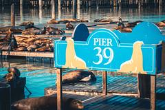 Pier 39 at Fisherman's Wharf, San Francisco, CA (David Youngblood) Tags: docks sonyalpha sonymirrorless sonya6300 seal sealion ocean touristattraction waterfront fisherman'swharf pier39 sanfrancisco california