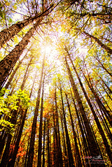 Light From Above (1300 Photography) Tags: nikon d750 affinity 20mm outdoors forest woods