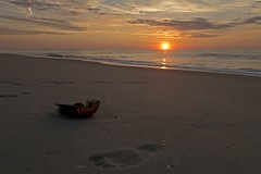 First Impression (delmarvajim) Tags: digitalart digitalprocessing digitaleffects seascape beach sand footprint dawn sun surf clouds waves water assateagueisland