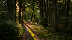 Forest Sunset (Bastian.K) Tags: forest wood woods forests wald wälder stuttgart sony rx1rii rx1rm2 sonnenuntergang sonne