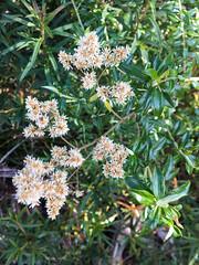 Dunno ([S u m m i t] s c a p e) Tags: springbrooknationalpark hiking trailrunning springbrook queensland australia