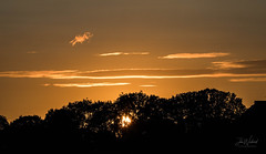 Sun, sky, clouds and the trees (John Woodward Photography) Tags: sky skyclouds silhouettes sunset clouds evening canon canondslr canoneos canonllenses canon5dmarkiv llenses shropshire