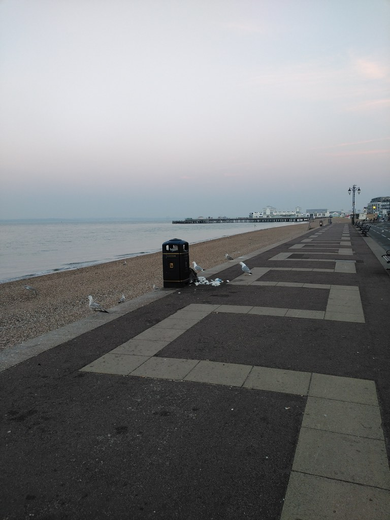 Bird attack on litter bin, Southsea sea front