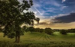 Markgräflerland (Toledo 22) Tags: nikon badenwürttemberg süddeutschland landwirtschaft nature landscape wolken blue sky himmel baum tree getreide wiese felder sonnenuntergang abend landschaft markgräflerland dattingen