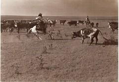 Postcrossing US-5428258 (booboo_babies) Tags: cowboy blackwhite cattle texas 1908 adventure west southwest unitedstates eieio