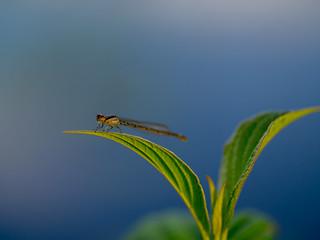 Dragonfly having a break