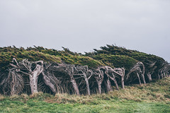 Nugget Point (bruit_silencieux) Tags: sonya7 sigma35mm14art newzealand nz southisland beach pacific travel nature thecatlins trees wind
