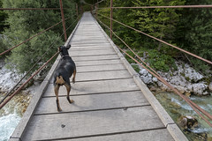 IMG_2888 (Bojan Marušič) Tags: slovenia slovenija soča nature reka river voda water