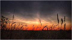 Tall grass (andystones64) Tags: sunset sunlight sunlit sky skywatching clouds cloud weather weatherwatch nature naturephotography photography grass silhouette countryside outdoors outside scunthorpe lincolnshire northlincs northlincolnshire nlincs