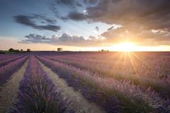 Sunset à Puimoisson, Plateau de Valensole (David SOULIVET - Photographies) Tags: valensole puimoisson lavande lavander sunset