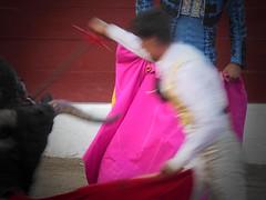 descabello (aficion2012) Tags: ceret céretdetoros francia france corrida bull bullfight tauromachie tauromaquia taureaux taureau matador toro torero toros toreador fraile gomez del pilar torear catalogne catalunya cataluña catalonia capa capote descabello descabellar