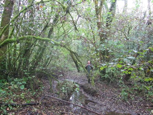 wet woodland The Gearagh 2