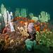 Sponge garden at Bare Is #marineexplorer