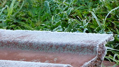 Massey, West Auckland, New Zealand (Sandy Austin) Tags: panasoniclumixdmcfz70 sandyaustin auckland massey westauckland northisland newzealand frost grass winter
