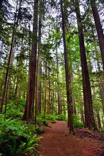 A Walk in Woods (Portraits Orientation)