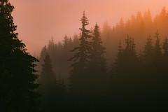 SAM_2942 (Apostol Dragiev) Tags: родопи rodopimountain rodopi mountain forest fog sunrise
