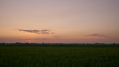 sunset (Jos Mecklenfeld) Tags: sunset sonnenuntergang zonsondergang sun sonne zon landscape landschaft landschap tarwe wheat weizen sony30mmf35macro sel30m35 sonya6000 sonyilce6000 westerwolde terapel groningen netherlands nl