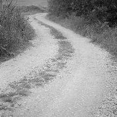S (Bernád Rozália) Tags: yashicamat124g kodaktrix400 ilfosol3 film analoque scan epsonv700 selfdeveloped landscape road