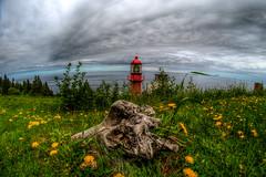 Phare De La Pointe À La Renommée Lighthouse Gaspé Peninsula (Steve Muise) Tags: gaspepeninsulatrip lighthouses lighthouse quebec ocean blue stump sky clouds fisheye flowers grass gren red