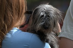 See Through Hair (Scott 97006) Tags: dog hairy vision seeing animal cute