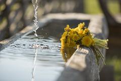 Löwenzahn_Brunnen (Naturpark Almenland) Tags: löwenzahn frühling almfrische alm almenland naturpark wasser