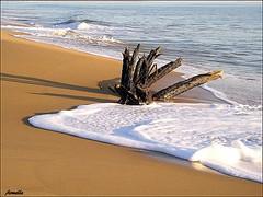 Remember ... (Armelle85) Tags: extérieur nature paysage mer océan vague plage branche bois sable