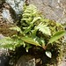 moss, fern and another plant growing on rock, Great Smoky Mountains National Park