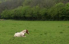 Hitch Hiker (RoystonVasey) Tags: canon eos m 1855mm stm zoom wales brecon beacons bbnp parc cenedlaethol bannau brycheiniog y mynydd du black mountain camarthen fan bir horse back rider crow