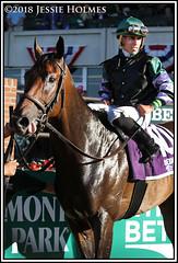 Diversify winners circle (Spruceton Spook) Tags: horseracing horses belmontpark starsandstripesfestival diversify suburban
