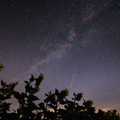 Rêverie (alexiscrozier1) Tags: tournesol voielactée étoile stars nikon amateur photo etoile filante