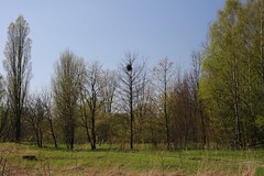 023A5975 (mkamelg) Tags: canon eos 5ds planar t 1450 planart1450 outdoor carlzeiss landscape krajobraz