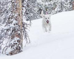 IMGP3194 (Matt_Burt) Tags: fdog jump luna monarch porpherypark powder ski snow