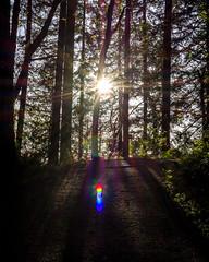 Falling Sun (Matthew Warner) Tags: 2018 april camas clarkcounty d7100 lacamaslakeregionalpark matthewwarner nikkor nikon nikond7100 nikonartists outdoors roundlake spring unitedstates washington us