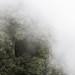 La niebla y el bosque