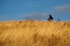 Grass Cycling (Bracus Triticum) Tags: grass cycling people calgary カルガリー アルバータ州 alberta canada カナダ 12月 december winter 2017 平成29年 じゅうにがつ 十二月 jūnigatsu 師走 shiwasu priestsrun