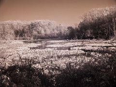 Mason Neck in Infrared (dzmears) Tags: landscape trees leaves park neck tree peaceful woods scenic water day pretty forest mason swamp scenery