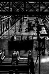 Estação da Luz - São Paulo (mariohowat) Tags: estaçãodaluz sãopaulo pretoebranco pb monochrome brazil brasil bw blackandwhite blancoynegro canon6d