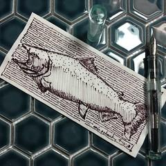 Salmon on a napkin (schunky_monkey) Tags: illustration art penandink ink pen fountainpen drawing draw sketching sketch napkin napkinsketch water fish salmon