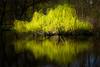 fairy-tale... (iwona.kilichowska) Tags: reflection reflections yellow water park outside springtime