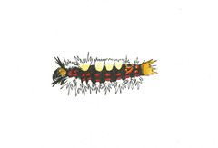 2018_Jun10_Uckfield_VapourerCaterpillar 1800 (wendytagg) Tags: 30dayswild